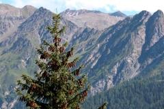 Wilde Natur vor schroffer Bergkulisse