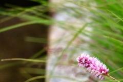 Blumen, Gräser Wasserläufe: Das perfekte Glück in der Natur