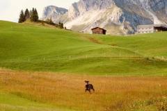 Die Schönheit der Natur von Oberlech ist einem Bilderbuch entsprungen.