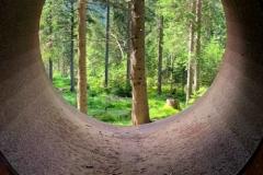 Wald erleben