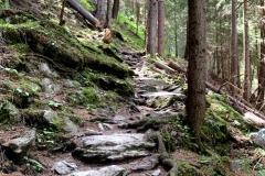 Steinige Naturwege